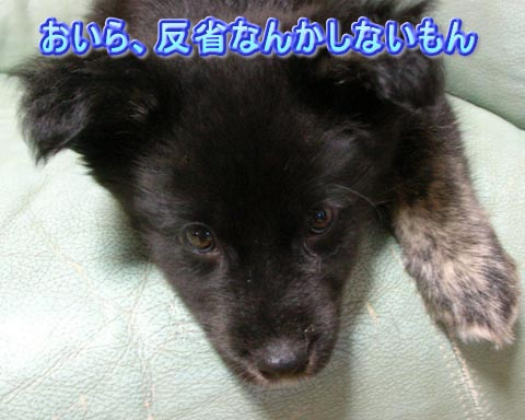 c0046751_17102666.jpg